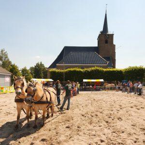 paardenmarkt-2